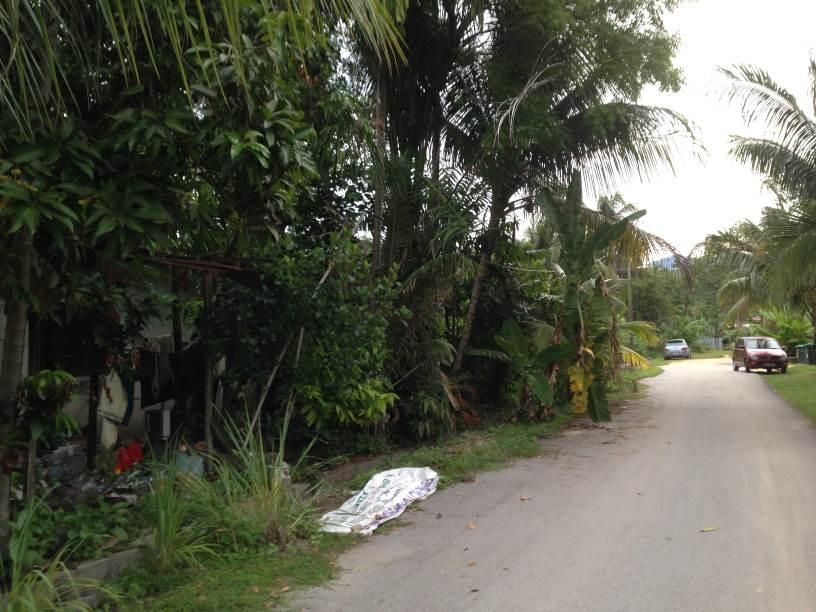 Road_view.jpg
